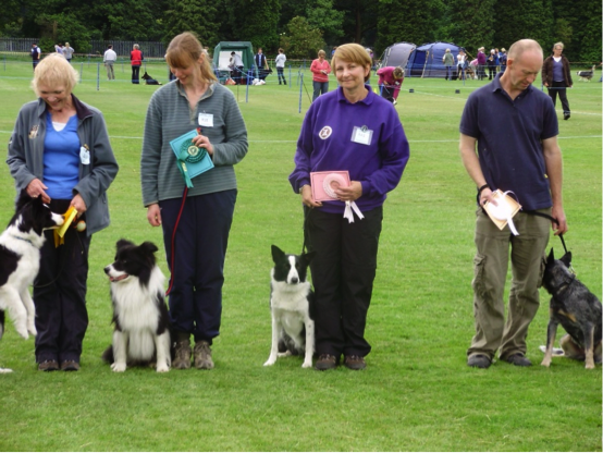 Warlingham Dog Training Club Show